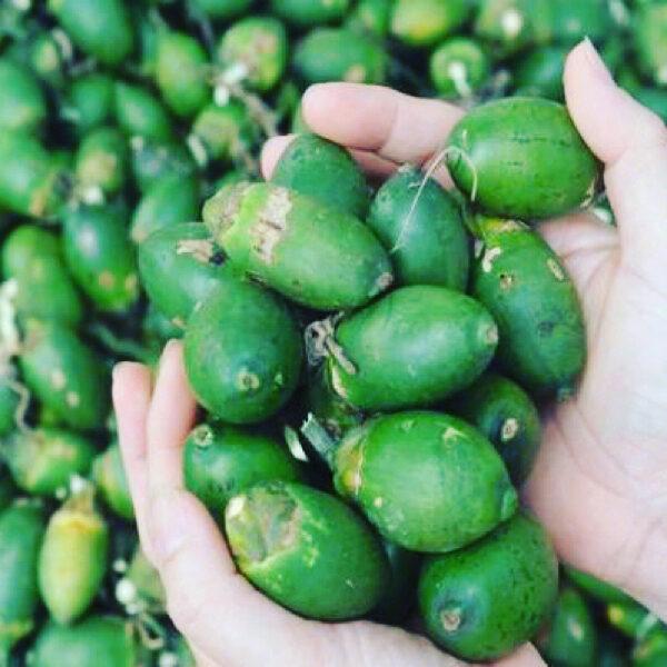 吃槟榔的好处和坏处是什么图片