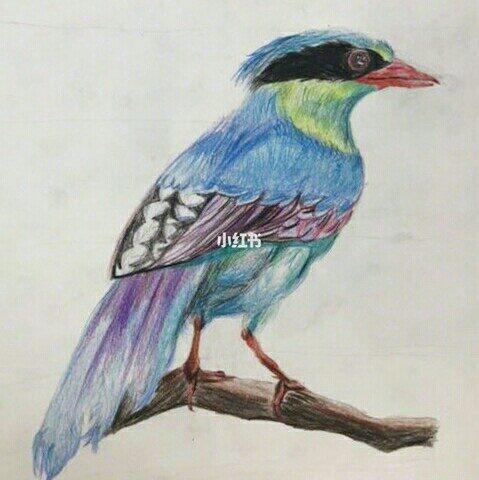 学生们画的动植物的彩铅画,每一张都很赞