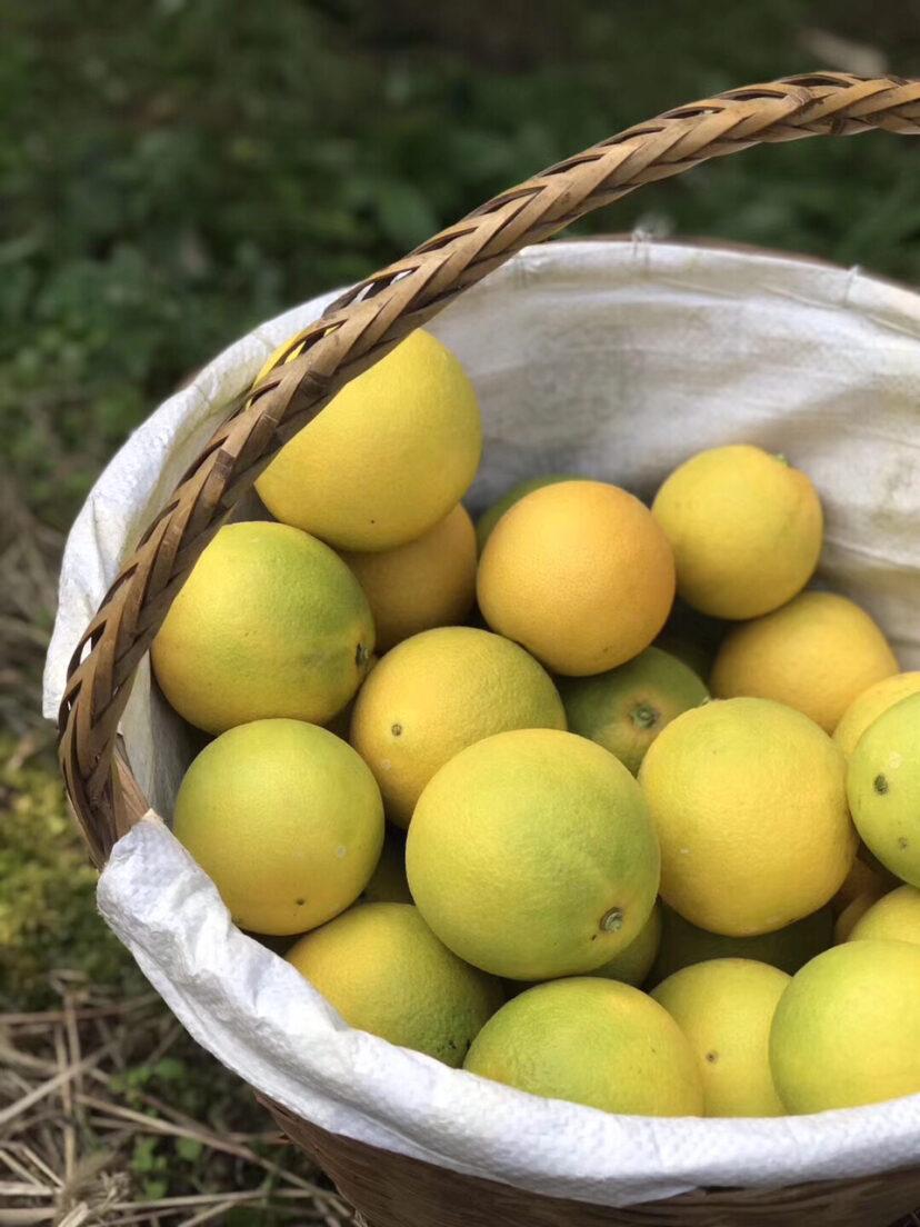 芒果孕妇可以吃吗