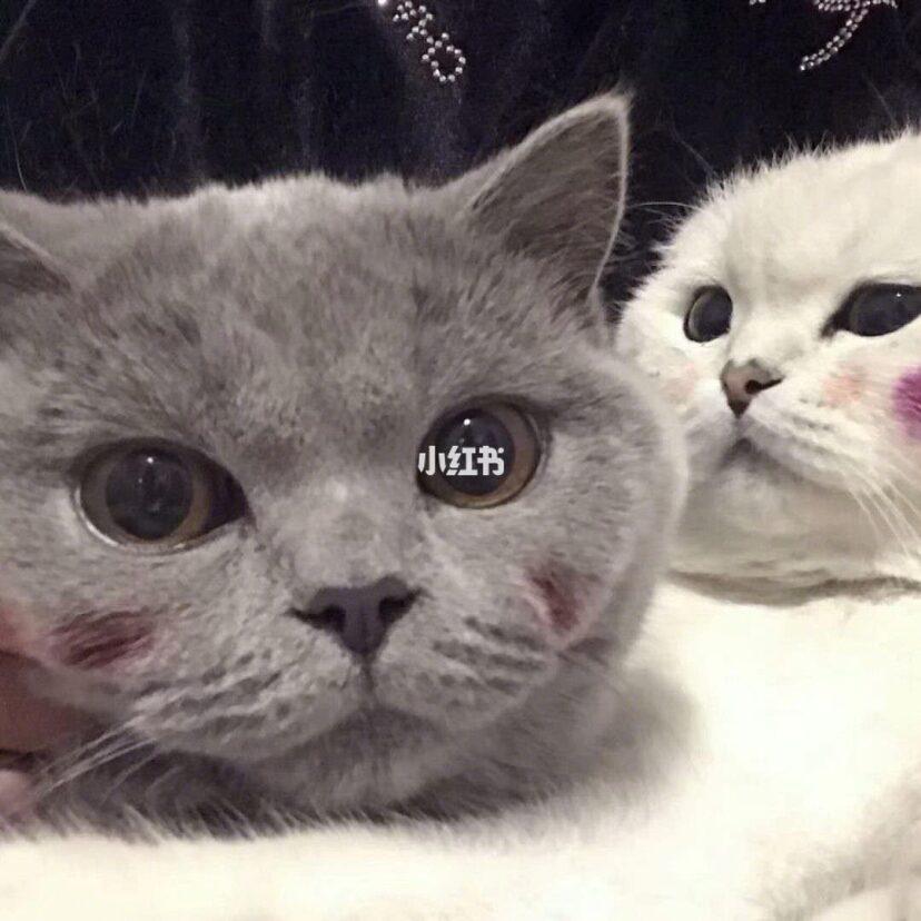 可爱的情侣头像 猫咪头像